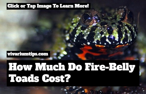 how much do fire belly toads cost