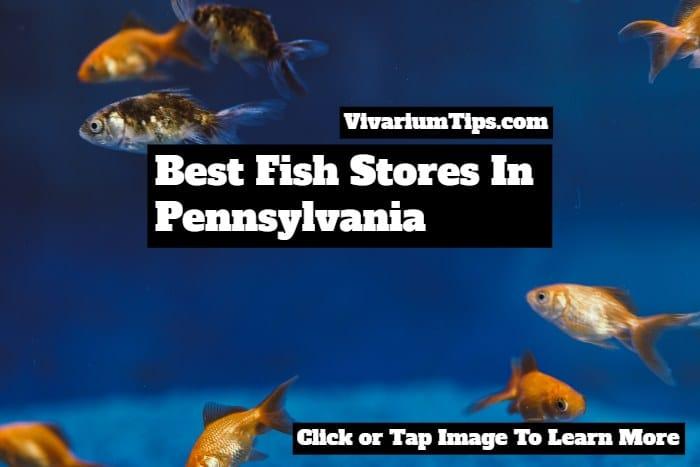 best fish stores in Pennsylvania