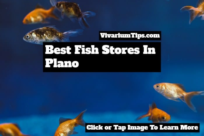best fish stores in plano