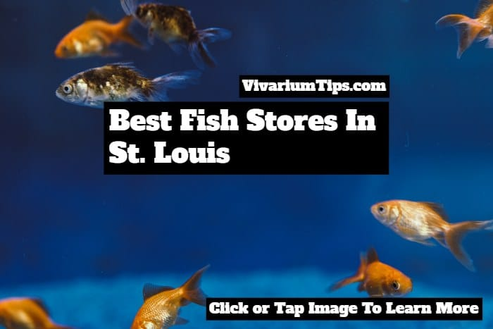 best fish stores in st louis