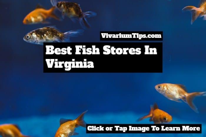 best fish stores in virginia