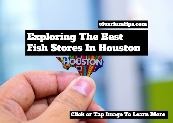 fish stores in houston
