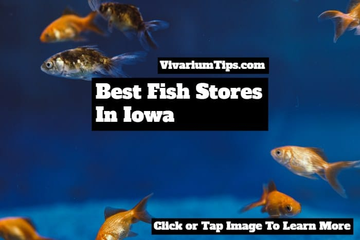 fish stores in iowa