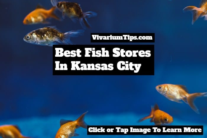 fish stores in kansas city