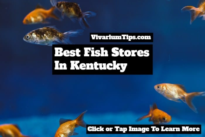 fish stores in kentucky
