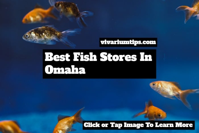 fish stores in omaha