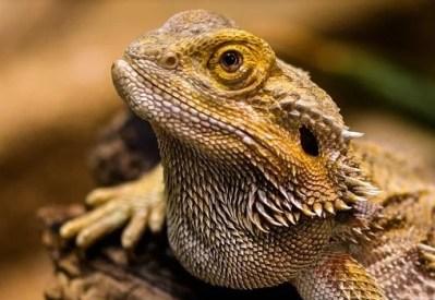 exo terra mini fogger for reptiles