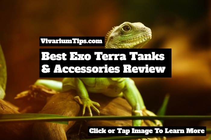 best exo terra tanks and accessories review