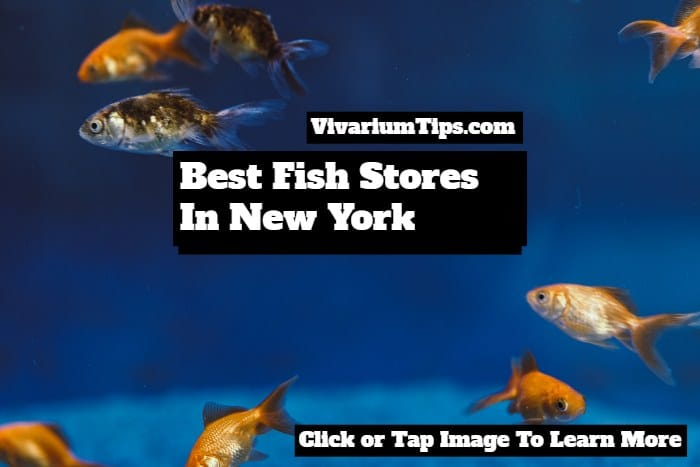 best fish stores in new york