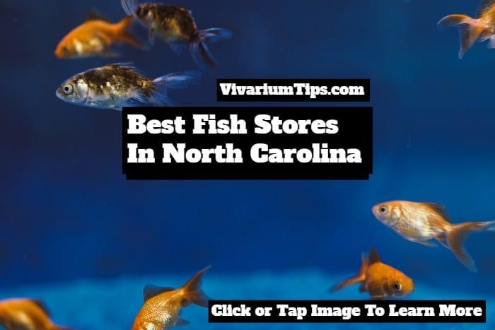 best fish stores in north carolina