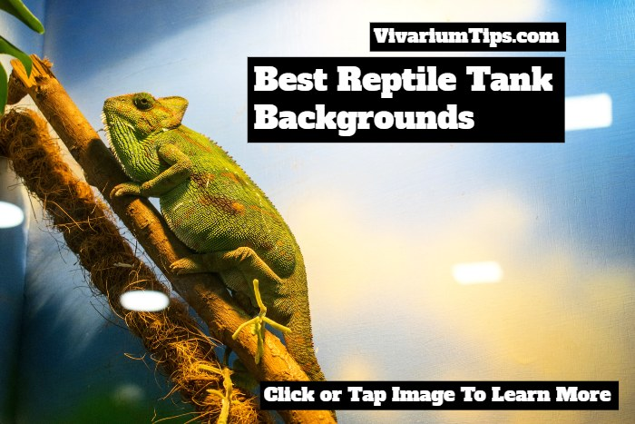 best reptile tank backgrounds