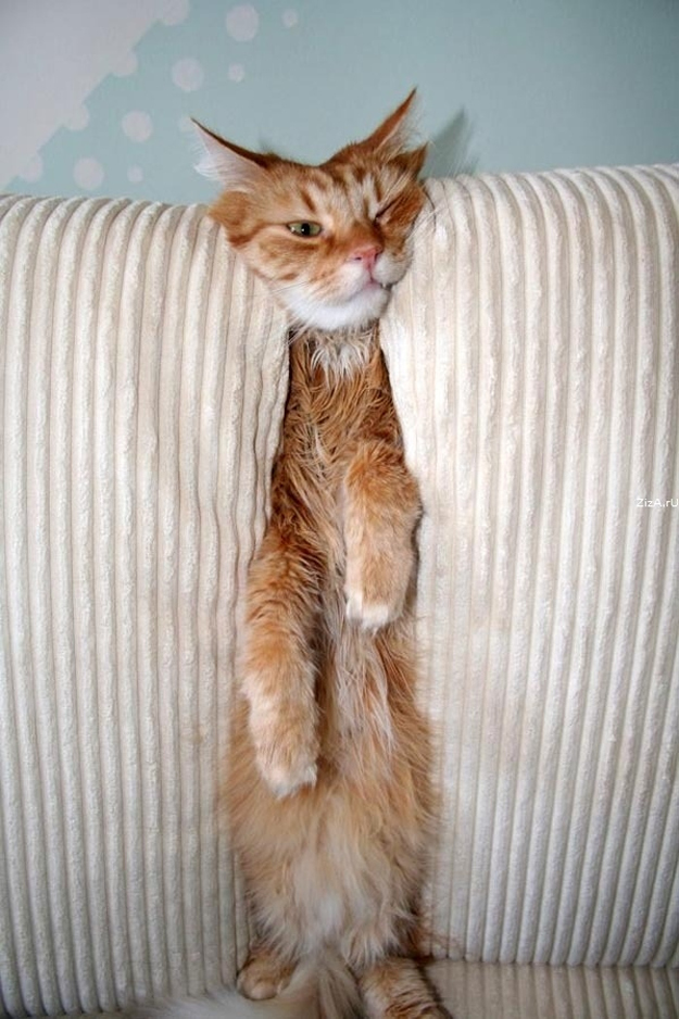Between two couch cushions