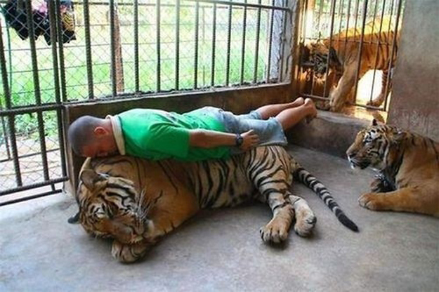 This dude planking on a tiger.