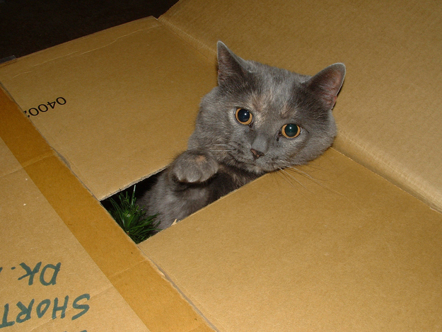 Already getting into the tree box? I see where this is headed.