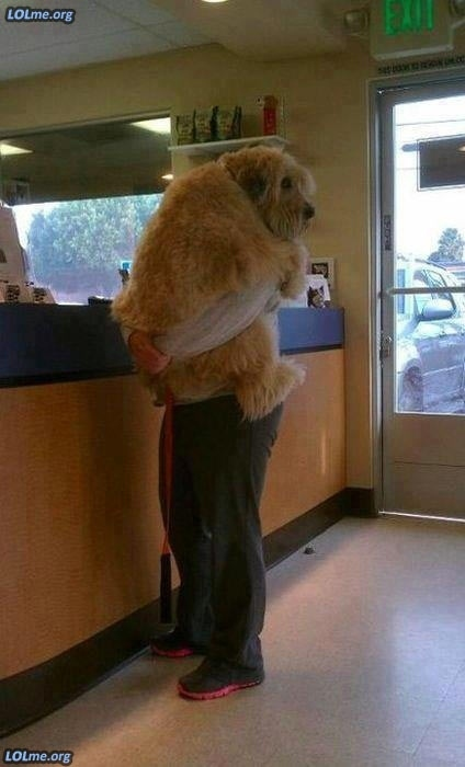 This dog who doesn't like to go to the vet.
