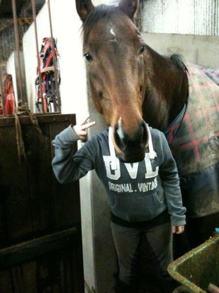 The perfectly timed horse head photo: