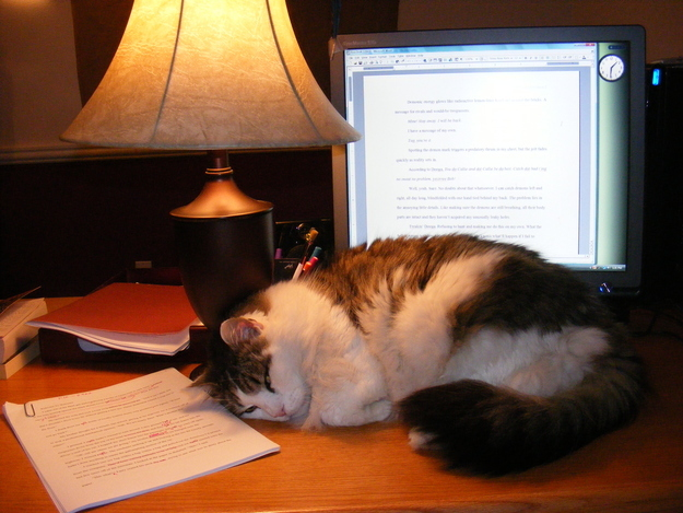 The Cat Who Stayed Up All Night Colour Co-Ordinating Her Folders