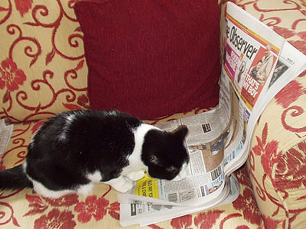 The Cat Who Reads British Newspapers To Stay Up-To-Date On World Affairs