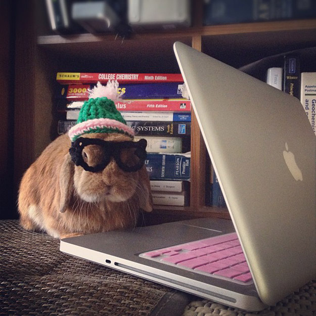 The Rabbit Who Wore School Uniform During The Vacation