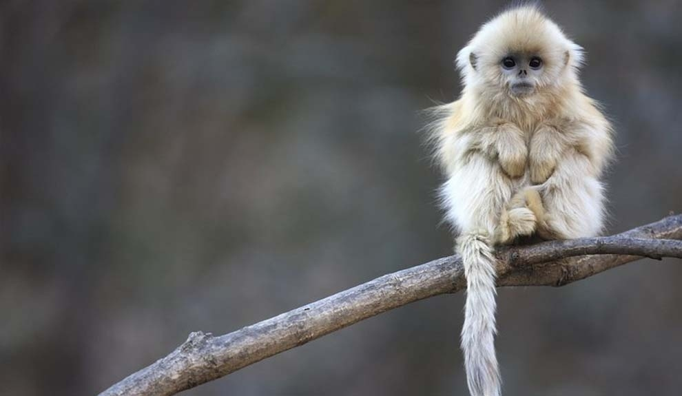 The cutest monkey ever to walk the Earth.