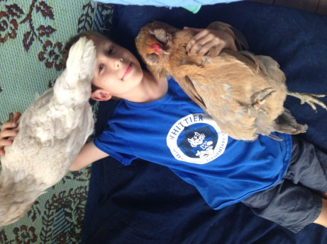 Totally abnormal behavior for my kid or for my chickens. Awesome!
