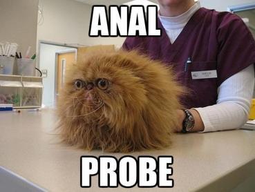 anal-probe