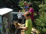 We raise day-old chicks with lots of handling and hand feeding. They become very sweet.