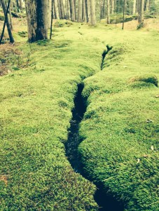 I was obsessed with moss