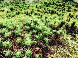 Wonderful moss