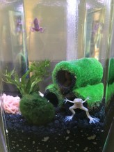 Our new additions, Jeffrey and Bradley (we are caring for them while our friends are gone)