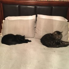 The cat room, AKA the guest room