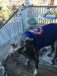Random guy stopped by to give Blue this cape