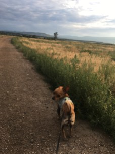 Scheissehund on his morning constitutional