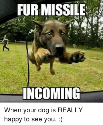 fur-missile-incoming-when-your-dog-is-really-happy-to-5223746