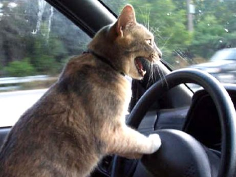crazy_driver_by_daneblaster