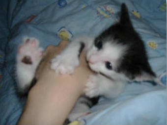 kitten-biting-hand-340x255.jpg