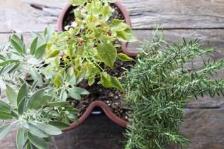 Sálvia, pimenta e alecrim ©Sabor de Fazenda