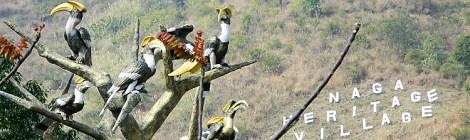Hornbills, Brandy And  A Pensive Monkey