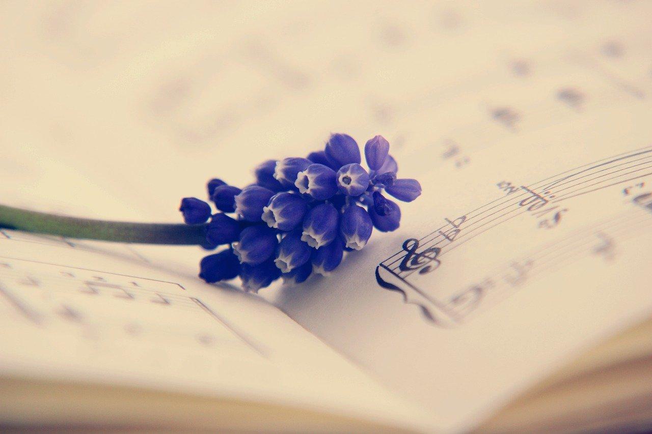 clef, hyacinth, flower
