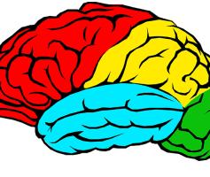 O que é Meta Cognição?