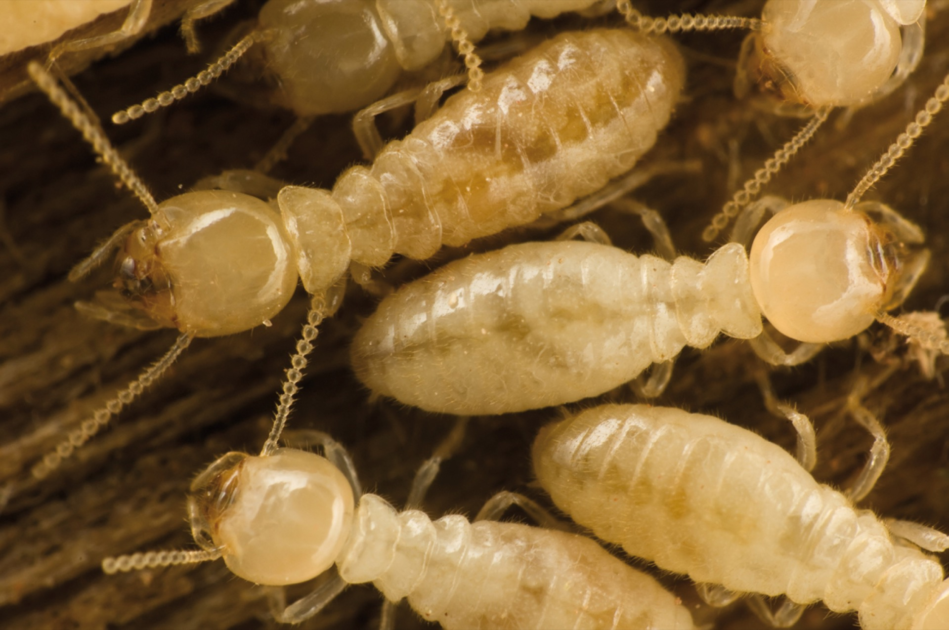 Fumigacion contra termitas - Jardin- Viverdi México Jardinería y Fumigación - viverdimexico.com