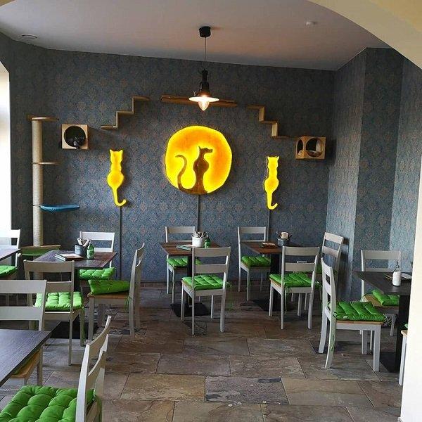 Café Katzentempel - locale senza glutine a Monaco di Baviera