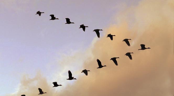 El vuelo del Pato