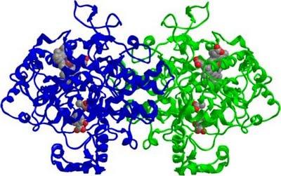 wpid-COX-2_inhibited_by_Aspirin.png-2013-02-19-15-26.jpg