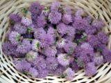 wpid-160px-Chive-Flowers-1-6280-2013-06-28-18-07.jpg