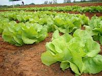 wpid-cultivos_de_hortalizas.JPG-2013-07-7-03-01.jpg