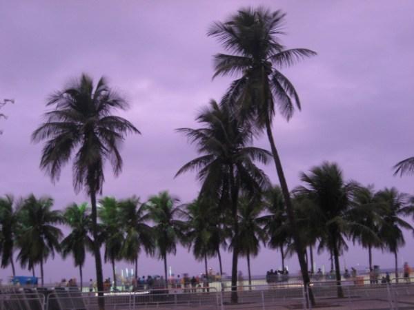 purple sky and palmtrees