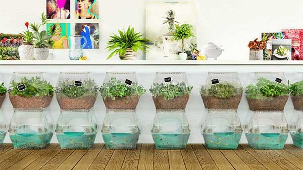 Aqualibrium Garden – piccolo orto biologico in casa