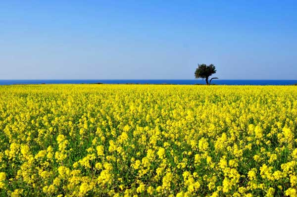 Cipro in primavera – Cyprus Walking Festival