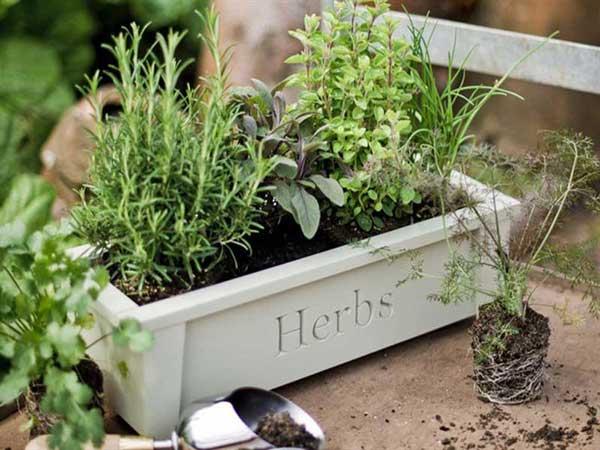 Orto sul balcone - ecco le piante facili da coltivare | Viviconstile